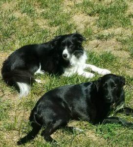 Kathy Bukaty dogs